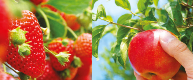 Soft Fruit Growers & Top Fruit Growers